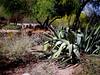 AZ-Phoenix-Desert Botanical Garden-2004-03-27-0039