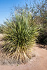 AZ-Phoenix-Desert Botanical Garden 2013-03-04-177