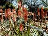AZ-Phoenix-Desert Botanical Garden-2004-03-27-0037