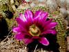 AZ-Phoenix-Desert Botanical Garden-2004-03-27-0002