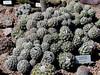 AZ-Phoenix-Desert Botanical Garden-2004-03-27-0044