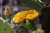 AZ-Phoenix-Desert Botanical Garden 2013-03-04-160