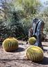 AZ-Phoenix-Desert Botanical Garden 2013-03-04-153