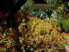 AZ-Phoenix-Desert Botanical Garden-2004-03-27-0042