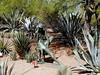 AZ-Phoenix-Desert Botanical Garden-2004-03-27-0036