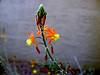 AZ-Phoenix-Desert Botanical Garden-2004-03-27-0022