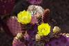 AZ-Phoenix-Desert Botanical Garden 2013-03-04-163