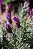 AZ-Phoenix-Desert Botanical Garden 2013-03-04-135