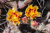 AZ-Phoenix-Desert Botanical Garden 2013-03-04-162
