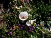 AZ-Phoenix-Desert Botanical Garden-2004-03-27-0008
