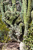 AZ-Phoenix-Desert Botanical Garden 2013-03-04-100