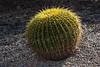 AZ-Phoenix-Desert Botanical Garden 2013-03-04-217
