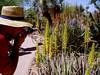 AZ-Phoenix-Desert Botanical Garden-2004-03-27-0004