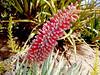 AZ-Phoenix-Desert Botanical Garden-2004-03-27-1001