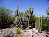 AZ-Phoenix-Desert Botanical Garden-2004-03-27-0030