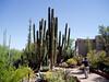 AZ-Phoenix-Desert Botanical Garden-2004-03-27-0014