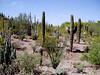 AZ-Phoenix-Desert Botanical Garden-2004-03-27-0020