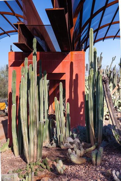 AZ-Phoenix-Desert Botanical Garden 2013-03-04-210