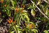 AZ-Phoenix-Desert Botanical Garden 2013-03-04-165