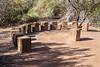 AZ-Phoenix-Desert Botanical Garden 2013-03-04-183