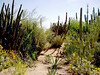 AZ-Phoenix-Desert Botanical Garden-2004-03-27-0013