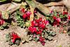 AZ-Phoenix-Desert Botanical Garden 2013-03-04-141