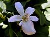 AZ-Phoenix-Desert Botanical Garden-2004-03-27-0024