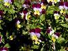 AZ-Phoenix-Desert Botanical Garden-2004-03-27-0027