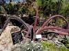 AZ-Phoenix-Desert Botanical Garden-2004-03-27-0048-Octopus Cactus