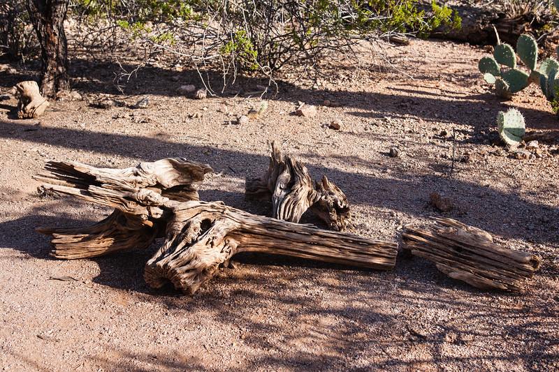 AZ-Phoenix-Desert Botanical Garden 2013-03-04-184