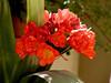 AZ-Phoenix-Desert Botanical Garden-2004-03-27-0021