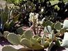 AZ-Phoenix-Desert Botanical Garden-2004-03-27-0035