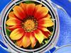 ART-2005-03-27-Flower in Tile-0001