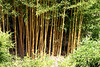 Bamboo-2005-08-24-0001