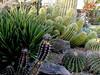 Cactus-2003-12-07-0003