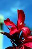 Canna-2007-05-05-0002