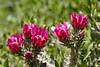 Cactus-Cane Cholla-2010-04-18-0001