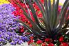 Cactus-2006-04-09-0002