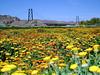 Calendula-2004-03-14-0001