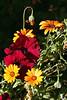 ~Mixed-Petunia-Daisy-African-2007-04-14-0001