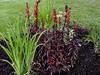 Cardinal Flower-2003-08-01-0002