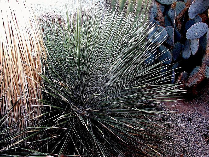 Cactus-2003-12-07-0001