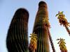Cactus-Saguaro-2003-12-07-0001