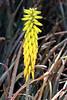 Cactus-Aloe Sp-2007-04-15-0001