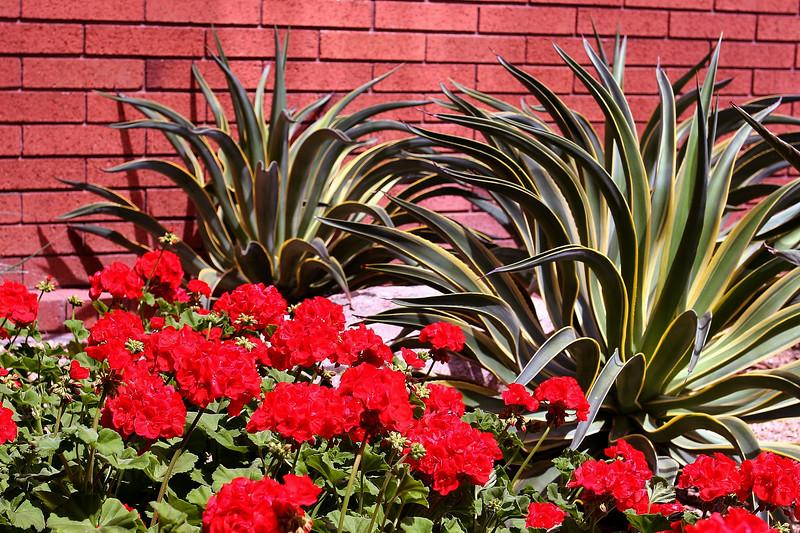 Cactus-2006-04-09-0003
