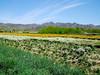Calendula-2004-03-14-0002