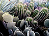 Cactus Mixed-2003-12-07-0001