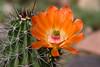 Cactus-Devil Cholla-2010-03-29-0002