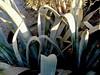 Cactus-2003-12-07-0002