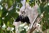 Australian Bottle Tree-2007-04-01-0001